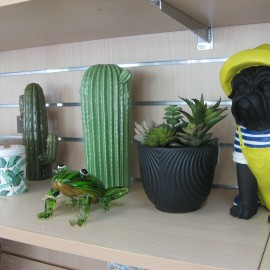 Cactus Cylindrique Vert